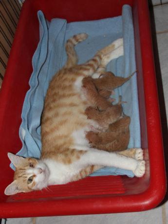 Salvina and babies